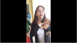 Woman receives new puppy birthday surprise - Video
