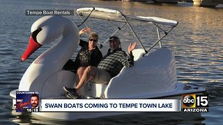 Swan boats coming to Tempe Town Lake