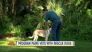 Two non-profits join forces to provide vets with pets - Video