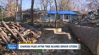 Trimmer charged after tree falls onto Sagamore Hills home, injuring elderly man - Video