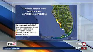 Red Tide causing fish kills in parts of Southwest Florida - Video