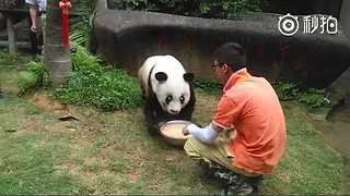 World's Oldest Captive Panda, Basi, Dies (File) - Video