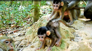 Cute Baby Monkey Now Play On Small Hill - Video