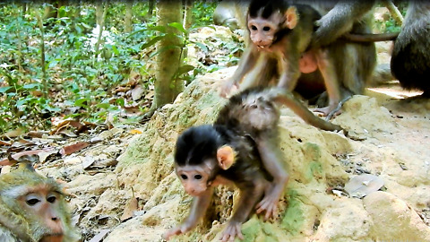 Cute Baby Monkey Now Play On Small Hill