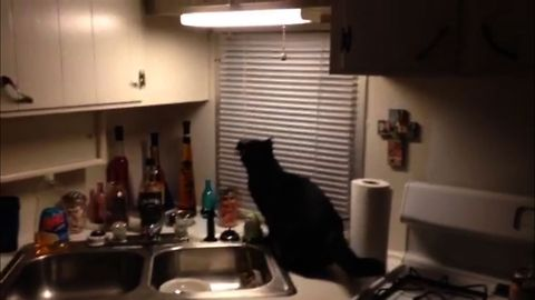 Cat Turns The Lights Out on Moth