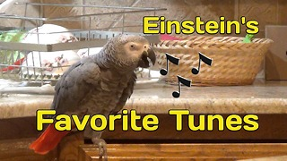 Talking parrot sings his favorite tunes