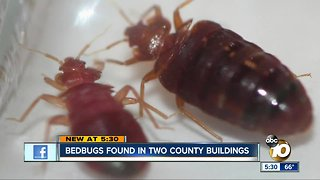 Bedbugs found at two San Diego County buildings