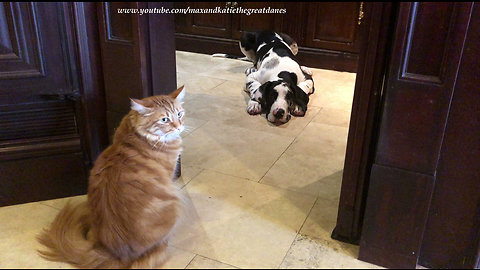 Bully cat refuses to let puppy out of the pantry