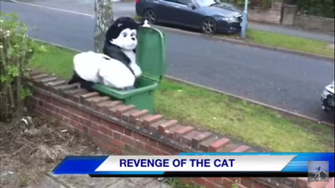 Revenge of the Cat