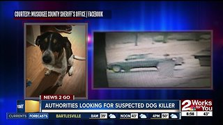 Authorities looking for suspected dog killer - Video