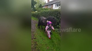 Three-year-old takes pony for a walk - Video