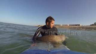 Curious seal plays with surfers in France - Video
