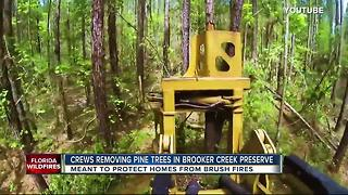 Pinellas Co. chopping down thousands of trees to prevent brush fires - Video