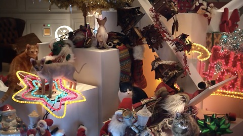 Cat Lovers Or Not, You'll Enjoy This Beautiful EPIC Christmas Video