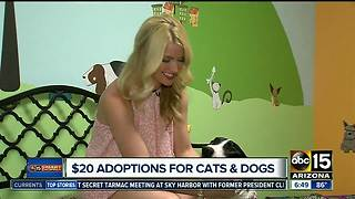 Affordable adoptions at Maricopa County shelter - Video