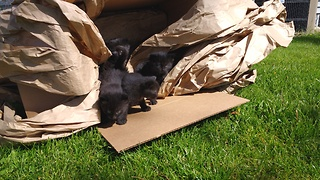 Kittens fearful of their first encounter with grass - Video