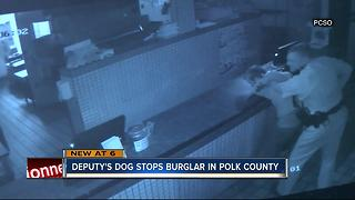 Polk man tries choking out sheriff's K-9 after breaking into pizza shop - Video