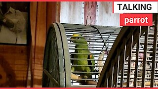 Video shows a parrot repeatedly saying 'tickle'