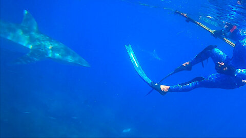 Spearfishing - Coral Trout, GIANT squid and Grey whaler sharks - Ep 05 Life Over Longevity