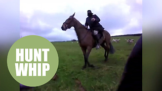 Shocking video shows a hunt saboteur being attacked by a hunt group - Video