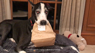 Excited Great Dane Can't Wait For Publix Chicken Snack