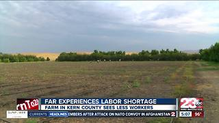 Kern County farm experiences labor shortage - Video