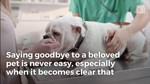 Brokenhearted Vet Reveals What Pets Do in Final Moments Before Being Put Down