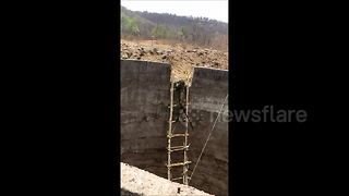 Moment snarling wild leopard rescued from well with makeshift ladder - Video