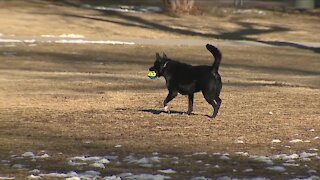 Petition proposes select hours for dogs off-leash at Denver city parks