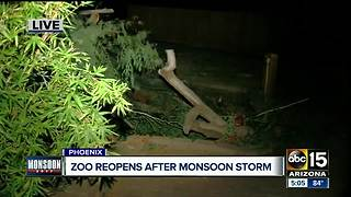 Phoenix Zoo reopens after monsoon storm earlier this week - Video