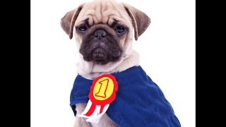 Pets Become Superheroes - Video