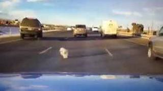 Dog falls from moving vehicle on I-70 - Video
