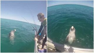 Friendly dolphin greets fishing boat in Australia