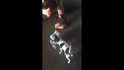 Baby and puppy adorably battle for toy dominance