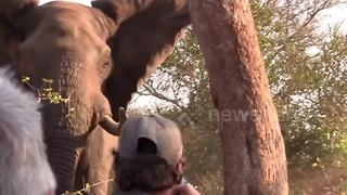 Elephant charges at tourists on walking safari - Video