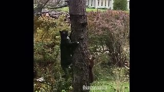 Fast-Thinking Squirrel Outsmarts A Cat As They Play Chase Up A Tree