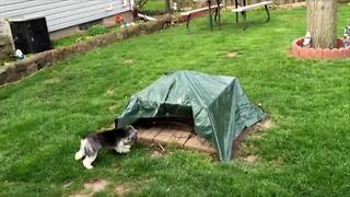 Cute Dog Pretends To Be A Rabbit - Video