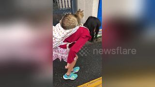 Schoolgirl gives stray cat a piggyback - Video