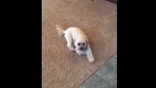 Dog's very strange method of eating food