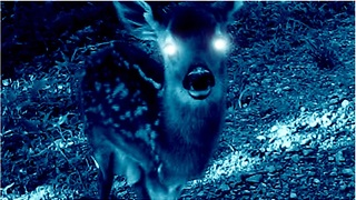 Creepy story about baby deer will send shivers down your spine! - Video