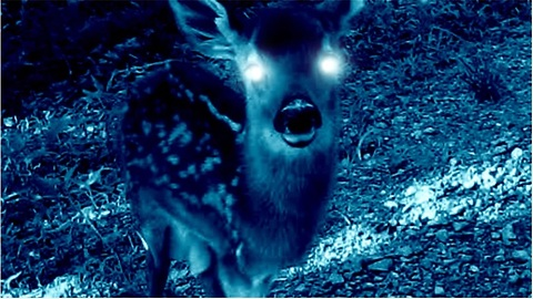 Creepy story about baby deer will send shivers down your spine!