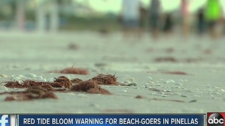 Red tide bloom warning for beach-goers in Pinellas - Video
