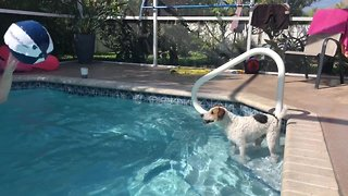Pup loves pool beach ball game with owner