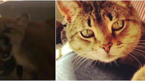 Family Shares Warning for Parents and Pet Parents After a Mountain Lion Invades Their Home