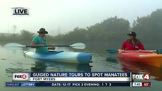 Guided Kayak Nature Tours help spot manatees in Southwest Florida - 7:30am live report