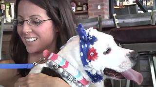 Beloved former bait dog finds forever home. - Video