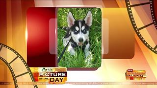 Art's Cameras Plus Picture of the Day for July 13! - Video