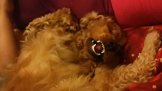 Dog Falls Asleep In The Funniest Way