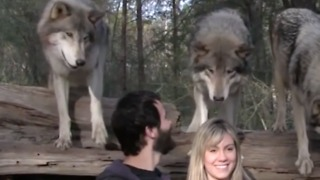The Seacrest Wolf Sanctuary In Florida Is One-Of-A-Kind And Simply Amazing - Video