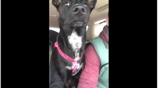 Dog Realizes She's At The Dog Park, Loses Her Mind - Video